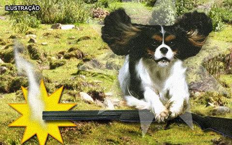 Seria Engraçado Se Não Fosse Trágico: Cachorro Mata Dono com Tiro
