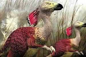 Animais do Futuro: Pássaro Terrestre