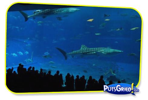Incrível: O Segundo Maior Aquário do Mundo