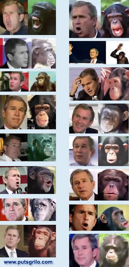 Bush Macaco
