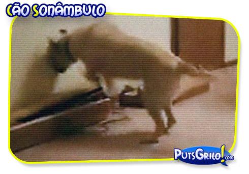 Vídeo Cão Sonâmbulo: Humor Pra Cachorro!