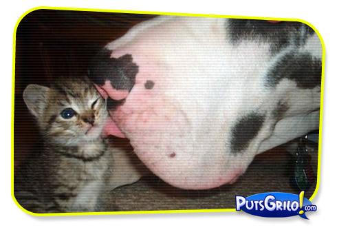 Momento Mensagens de Amor Animal