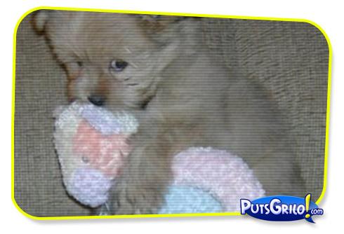 Momento Cuti Cuti: Cãozinho Carinhoso