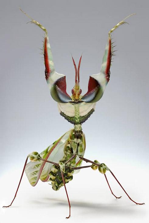 bizarree bug 2 Os Insetos Mais Bizarros do Mundo