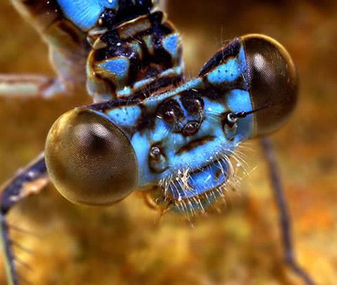 bizarree bug 3 Os Insetos Mais Bizarros do Mundo