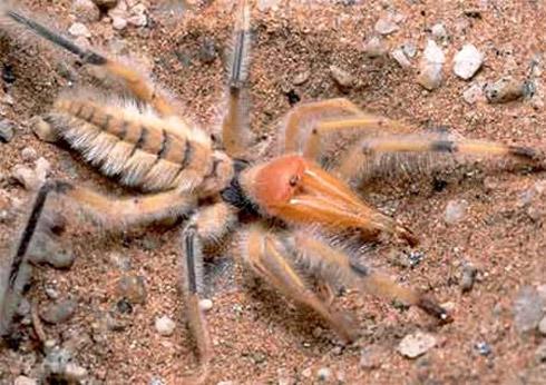 bizarree bug 9 Os Insetos Mais Bizarros do Mundo
