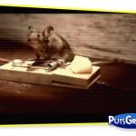 comercial, publicidade, vídeo, rato, Rocky