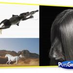 Cães e Cavalos em Fotos Espetaculares