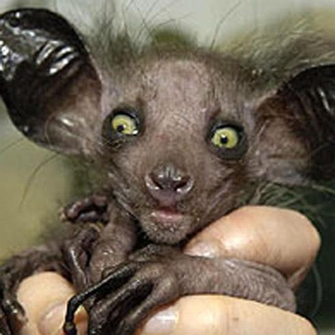 Fotos das Criaturas Mais Exóticas da Natureza