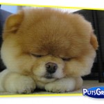 Momento Cute Cute: O Cachorro Mais Fofo do Mundo