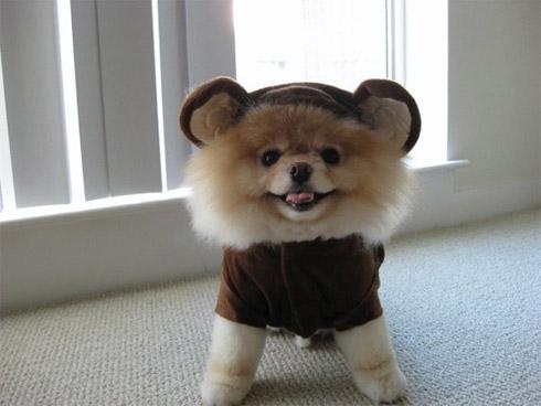 Momento Cute Cute: O Cachorro Mais Fofo do Mundo