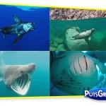 Calendário com Fotos Incríveis de Animais Marinhos