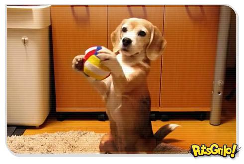Cachorro goleiro vira hit no Youtube