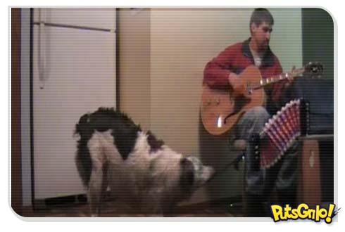 cachorro toca acordeon