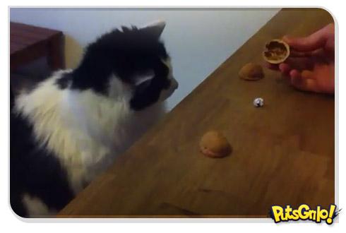 Gato no jogo de adivinhação