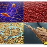 Corpo humano em fotos microscópicas