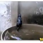 Gato praticando natação