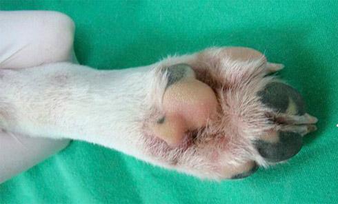 Cachorro mutante brilha muito na Coréia