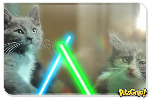 Gatos Jedi bancando o Darth Vader com sabres de luz