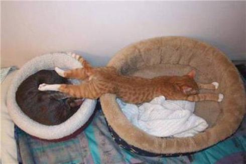 As melhores posições na cama