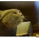 Demon Cat 3, A Missão: Gato possuído