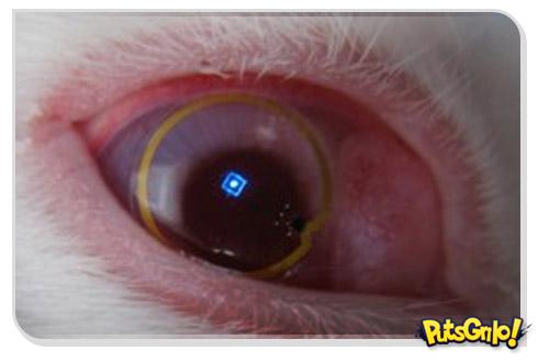 Invenção de futuro: Lente de contato eletrônica