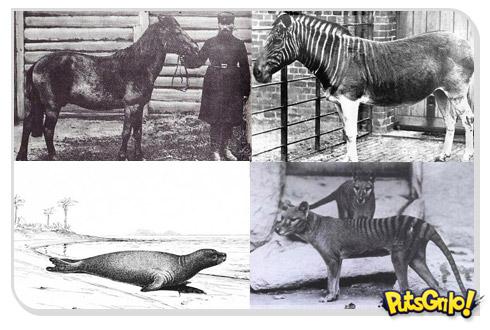 animais extintos 1 10 animais que foram à extinção na era moderna