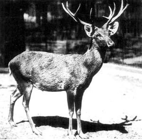 animais extintos 11 10 animais que foram à extinção na era moderna