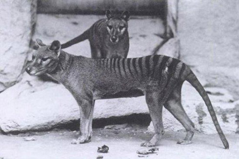 animais extintos 2 10 animais que foram à extinção na era moderna