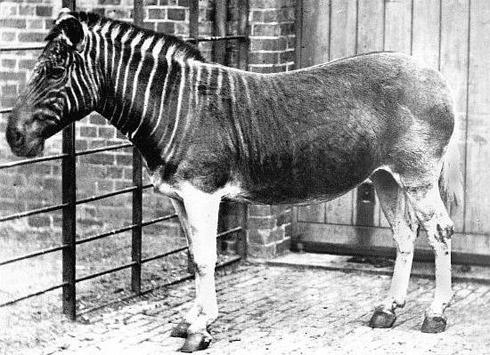 animais extintos 5 10 animais que foram à extinção na era moderna