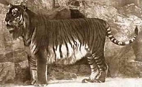animais extintos 6 10 animais que foram à extinção na era moderna