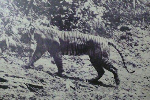 animais extintos 7 10 animais que foram à extinção na era moderna