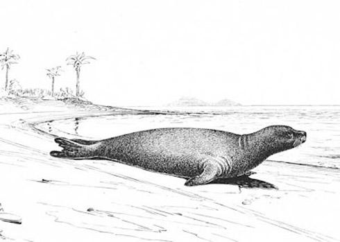 animais extintos 8 10 animais que foram à extinção na era moderna