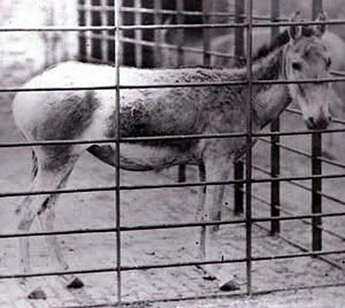 animais extintos 9 10 animais que foram à extinção na era moderna