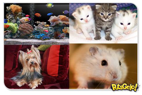 Animais de estimação para criar em apartamento