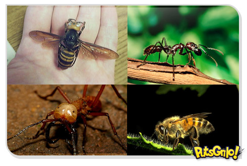 danger insects 1 Animais: Os insetos mais perigosos do mundo