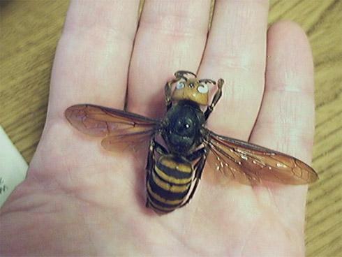 Animais: Os insetos mais perigosos do mundo