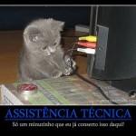 Assistência Técnica Gato