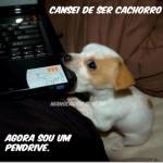 Cachorro Pendrive