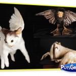 Fotos: Animais Empalhados Bizarros