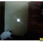 Gato e o reflexo do sol