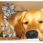 Cachorro, gato e rato numa amizade improvável