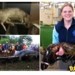 fotos-animais-gigantes-capturados