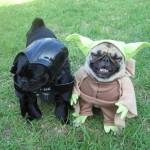 Cachorros Fantasiados
