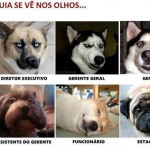 Tipos de Cachorros
