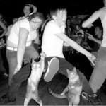 Dança Gatos